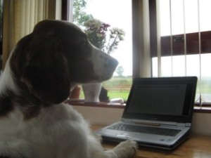 Typing_dog